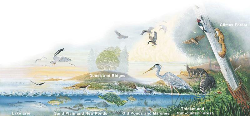 Presque Isle Ecological Zones   TREC Foundation